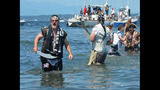 SeattleInsider: Seafair Pirates Storm Alki… - (15/25)