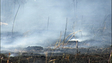 Wildfire leaves blackened path of destruction - (6/21)