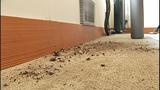 Studio ransacked by compliant burglar - (11/11)