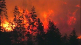 Fast-growing fire devours forest - (24/25)