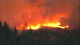 Fast-growing fire devours forest - (15/25)