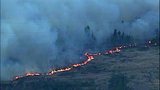 Fast-growing fire devours forest - (25/25)
