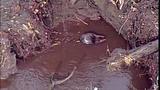 Broken beaver dam floods homes, road - (4/20)