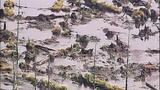 Broken beaver dam floods homes, road - (12/20)