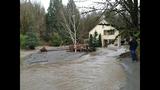 Broken beaver dam floods homes, road - (11/20)