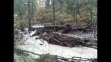 Broken beaver dam floods homes, road - (7/20)