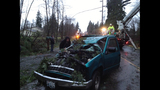 Truck damaged after tree lands on top - (3/6)