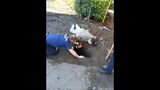 Crews rescue dog out of drainage pipe - (5/6)