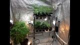 Marijuana, pot treats found at dispensary - (6/6)