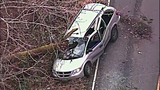 Tree nearly impales driver of van - (7/9)