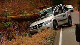 Tree nearly impales driver of van - (8/9)