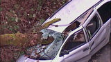 Tree nearly impales driver of van - (9/9)