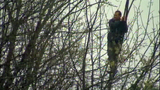 Suspect shifts, shakes in tree - (5/7)