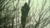Suspect shifts, shakes in tree - (6/7)