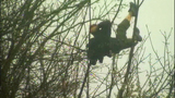 Suspect shifts, shakes in tree - (7/7)