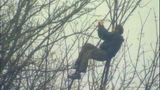 Suspect shifts, shakes in tree - (2/7)