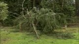 High winds topple trees - (4/5)