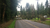 High winds topple trees - (1/5)