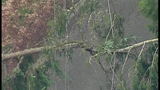 High winds topple trees - (3/5)