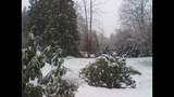 Spring snow photos - (7/11)