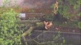 Sudden storm wreaks havoc - (10/25)