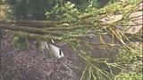Sudden storm wreaks havoc - (21/25)