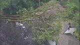 Sudden storm wreaks havoc - (18/25)