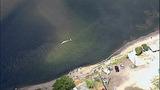 Gray whale under Purdy Bridge - photos - (18/18)