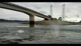 Gray whale under Purdy Bridge - photos - (6/18)