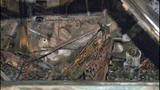 PHOTOS: Cadillac torched in possible hate crime - (2/14)
