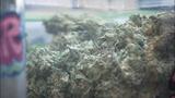 Medical marijuana farmers market_3967246