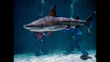 PHOTOS: Underwater With Sharks At Point… - (17/23)