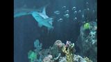 PHOTOS: Underwater With Sharks At Point… - (7/23)