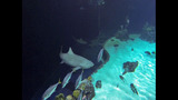 PHOTOS: Underwater With Sharks At Point… - (20/23)