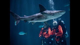 PHOTOS: Underwater With Sharks At Point… - (6/23)