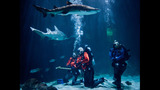 PHOTOS: Underwater With Sharks At Point… - (4/23)
