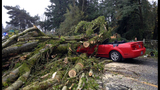 PHOTOS: Windstorm rocks Seattle, closes… - (2/25)