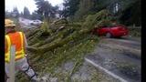 PHOTOS: Windstorm rocks Seattle, closes… - (11/25)