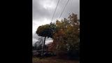 PHOTOS: Windstorm rocks Seattle, closes… - (20/25)