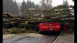 PHOTOS: Windstorm rocks Seattle, closes… - (1/25)