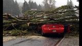 PHOTOS: Windstorm rocks Seattle, closes… - (1/25)