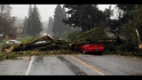 PHOTOS: Windstorm rocks Seattle, closes… - (23/25)