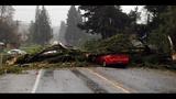 PHOTOS: Windstorm rocks Seattle, closes… - (23/25)