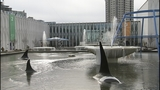 PHOTOS: Frozen fountains turn to icy sculptures - (10/12)