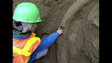 PHOTOS: Ice Age tusk found in Seattle's South… - (3/25)