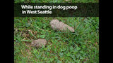 SeattleInsider: Worst Seattle make out locations - (4/25)