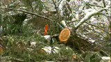 PHOTOS: Workers clear downed trees from roads - (3/10)