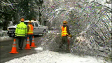 PHOTOS: Workers clear downed trees from roads - (9/10)