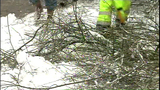 PHOTOS: Workers clear downed trees from roads - (10/10)