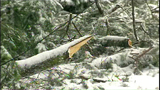 PHOTOS: Workers clear downed trees from roads - (1/10)